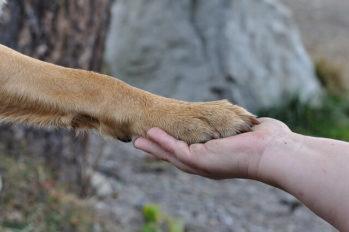 Dog paw and human hand shown.