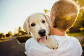 Do Dogs Love Their Owners, Golden Retriever puppy being held by male owner.