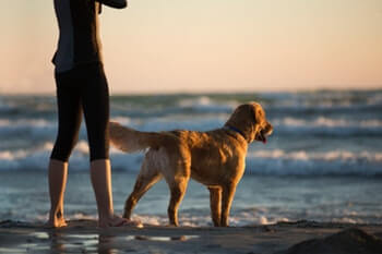 Golden Retriever and owner standing on the beach looking out in the water.
