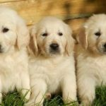 How To Choose A Puppy From A Litter -The Right Puppy For You