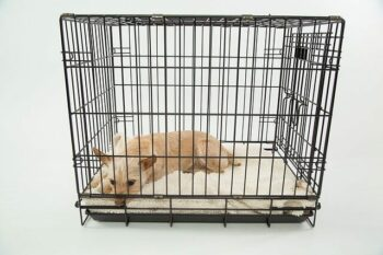 Small dog shown laying in a top rated dog crate.