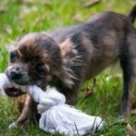 6 Best Teething Toys For Puppies You Need To Get Now
