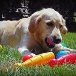 Best Toys For Golden Retrievers-10 Great Finds