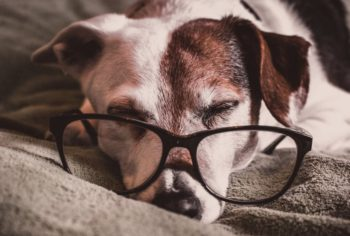 Dog Sleeping With Glasses