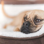 Chew Proof Dog Beds Guaranteed-7 Best Reviewed
