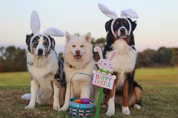 Easter Toys For Dogs [15 Great Finds For Your Dog's Easter Basket]