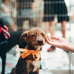 Adopting From A Dog Shelter [Know The Pros And Cons!]