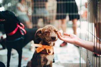 Adopting From A Dog Shelter - Puppy shown in cage with a woman's hand reaching to pet it.