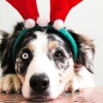 Christmas Gifts For A Dog [Top 15 For 2020]