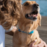 FitBark GPS Review-The All In One Health Tracker