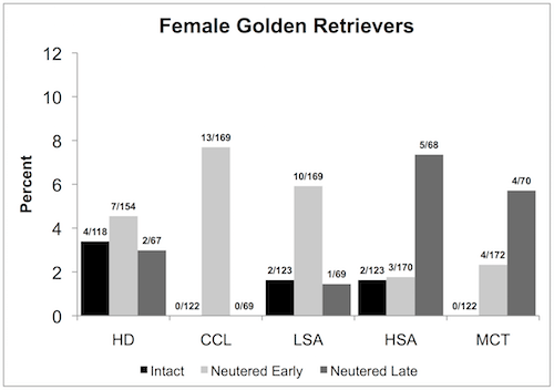 A female Golden Retriever comparison chart between intact females and females neutered early and late, showing the percentage of health issues.
