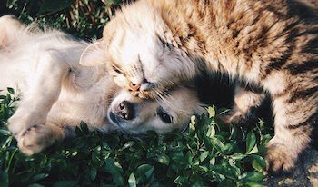 Puppy and cat cuddling together in the grass.