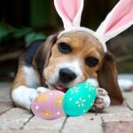 Easter Outfits For Dogs