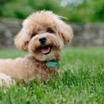 Best Clippers For Dog Grooming [Top 5 Picks For The DIY Groomer]