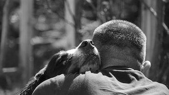 Dog and owner hugging, the dog's face is shown and the owner's back is to us.