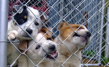 3 Puppies biting a wire cage.
