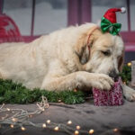 Christmas Gifts For Dog Moms [My 10 Favourites]