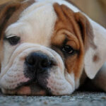 Do Dogs Show Grief?