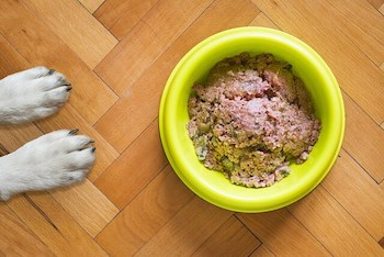 Is A Raw Food Diet Good For Dogs - 2 white dog paws shown in front of a yellow dog bowl filled with raw dog food.