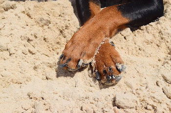 Mushers Secret For Dogs - Two front dog paws shown in sand.