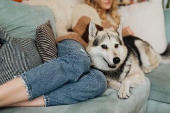 Woman and husky lying on a light green couch together.