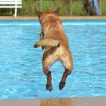 Best Dog Pool For Large Dogs [6 Best Reviewed]