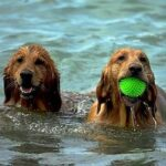 8 Amazing Canine Water Toys Your Dog Will Love