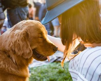 What Golden Retrievers Need - A Golden Retriever getting petted by a woman.
