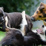 Why Dog Parks Are Bad [10 Reasons & Where To Go Instead]